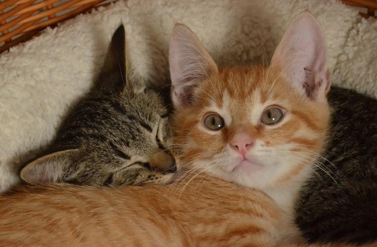 Consigli sulla salute del gatto: prevenire è meglio che curare