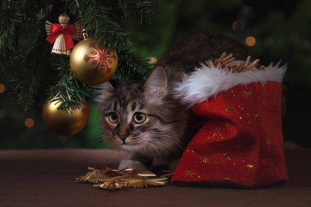 Gatto e albero di Natale: la guida!