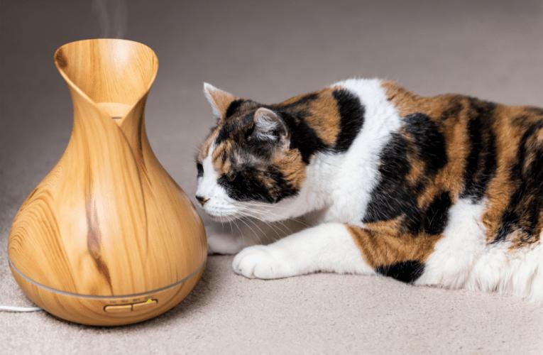 Olii essenziali per animali, l'aromaterapia per cani e gatti