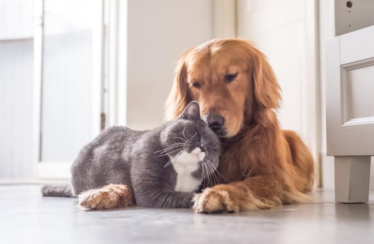 Gatti e cani possono vivere insieme?