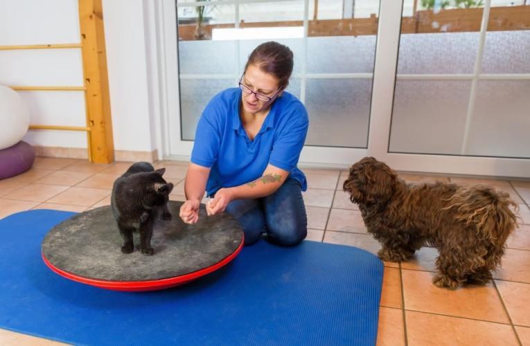Fisioterapia veterinaria per gatti, come funziona