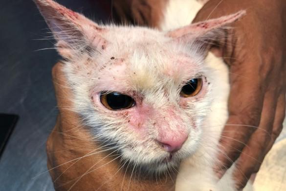 rogna-gatto-foto