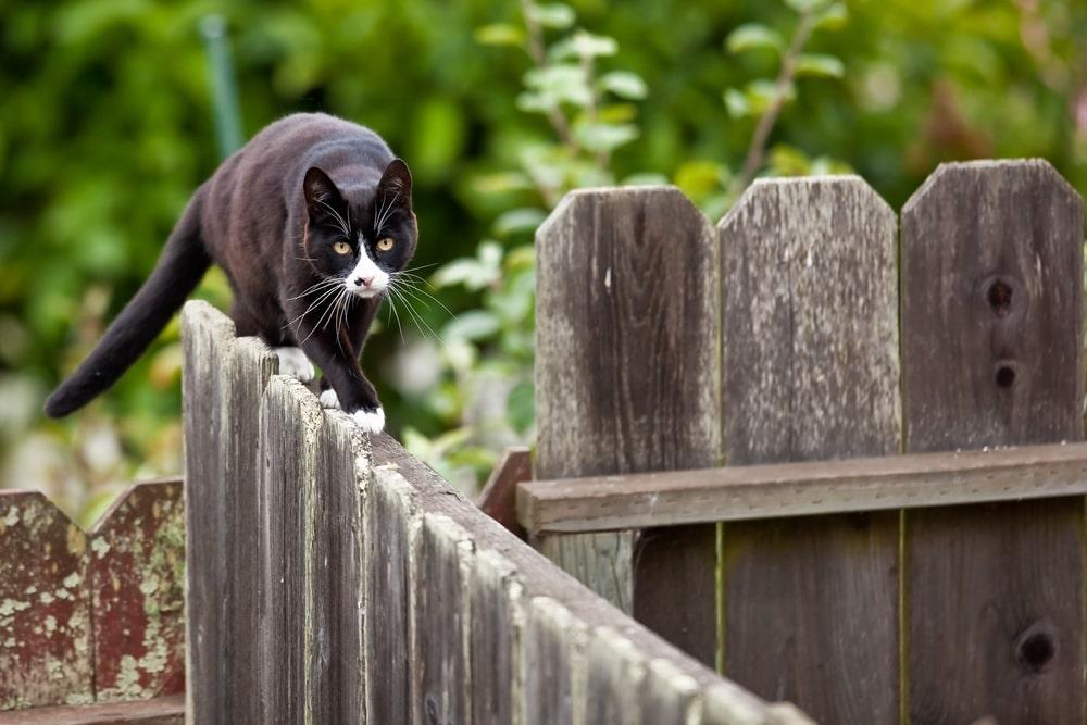 recinzione-gatto