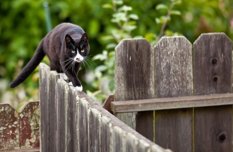 Giardino in sicurezza per gatti: come fare?