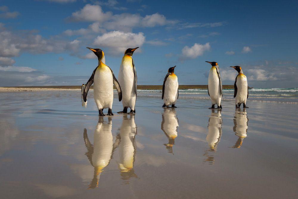 argentina pinguini