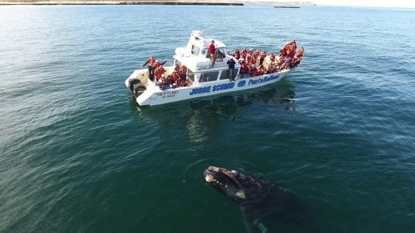 argentina chubut balene