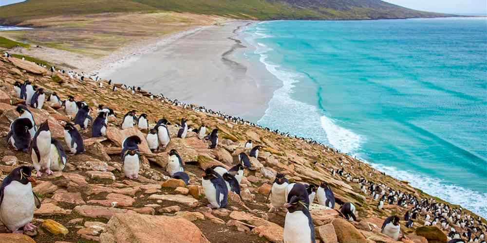 argentina malvinas natura