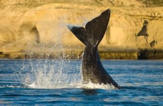 argentina penisola valdés chubut balene