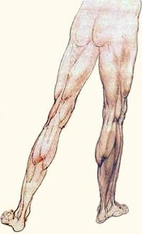 הבדל באורך הרגליים מה המשמעות
