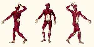 כאבי שרירים אחרי אימון