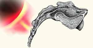 כאבים בעצם הזנב טיפול