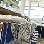 Muzium Alam Semulajadi (Museum of Nature) picture 4