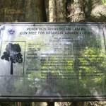 Icon tree for Botanical Garden,Labuan