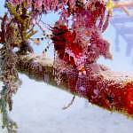 A red Lionfish in camouflage