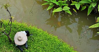 Lush Greenery at Chiang Rai