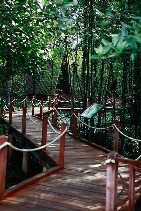Mangrove Swamp, Kuala Sepetang