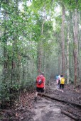 Walking into the tropical forest.