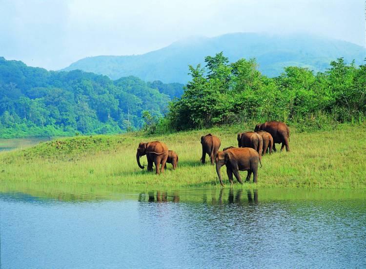 Periyar Wild Life Sanctuary