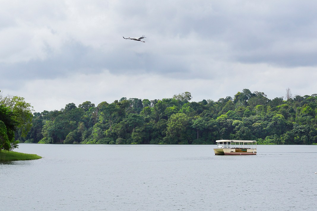 River Safari Cruise - During the cruise journey, passengers are able to learn about the various flora and fauna that surround the reservoir and the delicate freshwater habitats.