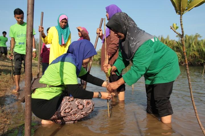 iM4U volunteers planting baby mangrove trees