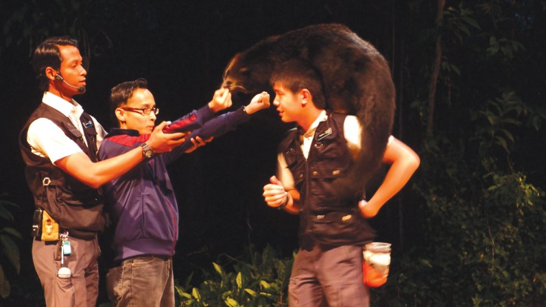 The binturong - Don't miss Creatures of the Night show, held at a small open theatre and performed by nocturnal animals