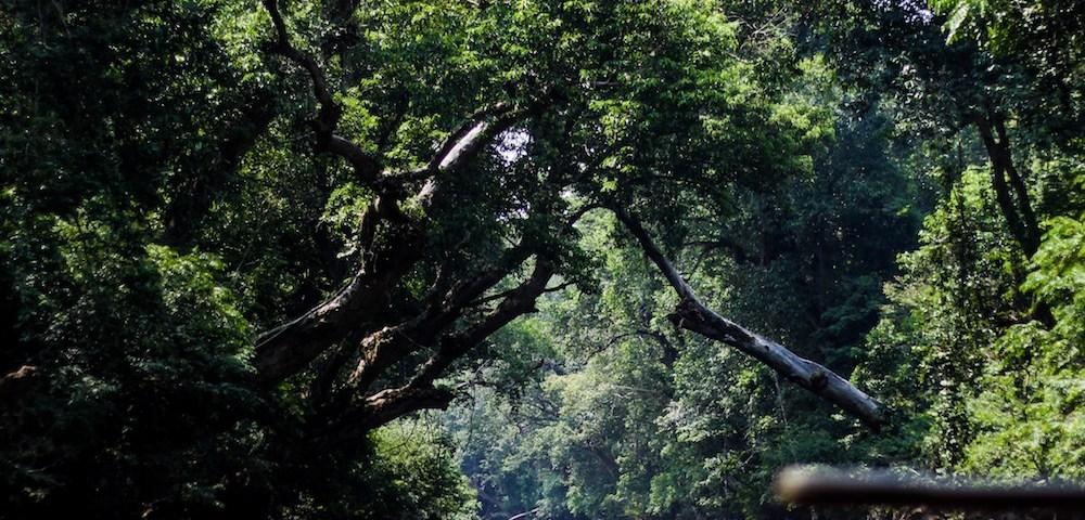 Discovering Eco-Tourism Wonders in Putrajaya and Pahang