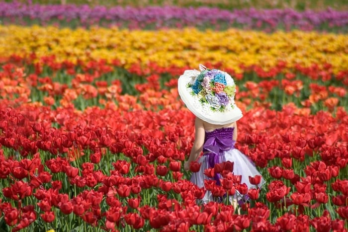 Victoria in Bloom: Where to See Flowers Blooming This Spring!