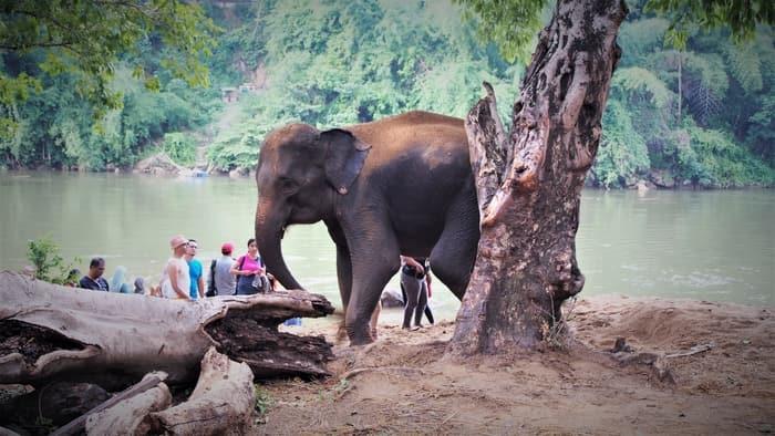 Elephant Camp Sai Yok