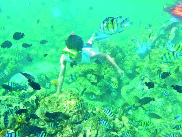 Snorkelling amongst fishes at Pulau Rubiah
