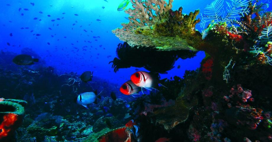 Underwater Wonderland At Komodo National Park