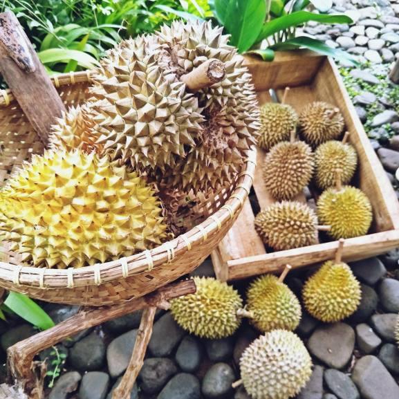 Durians at Pondok Indah