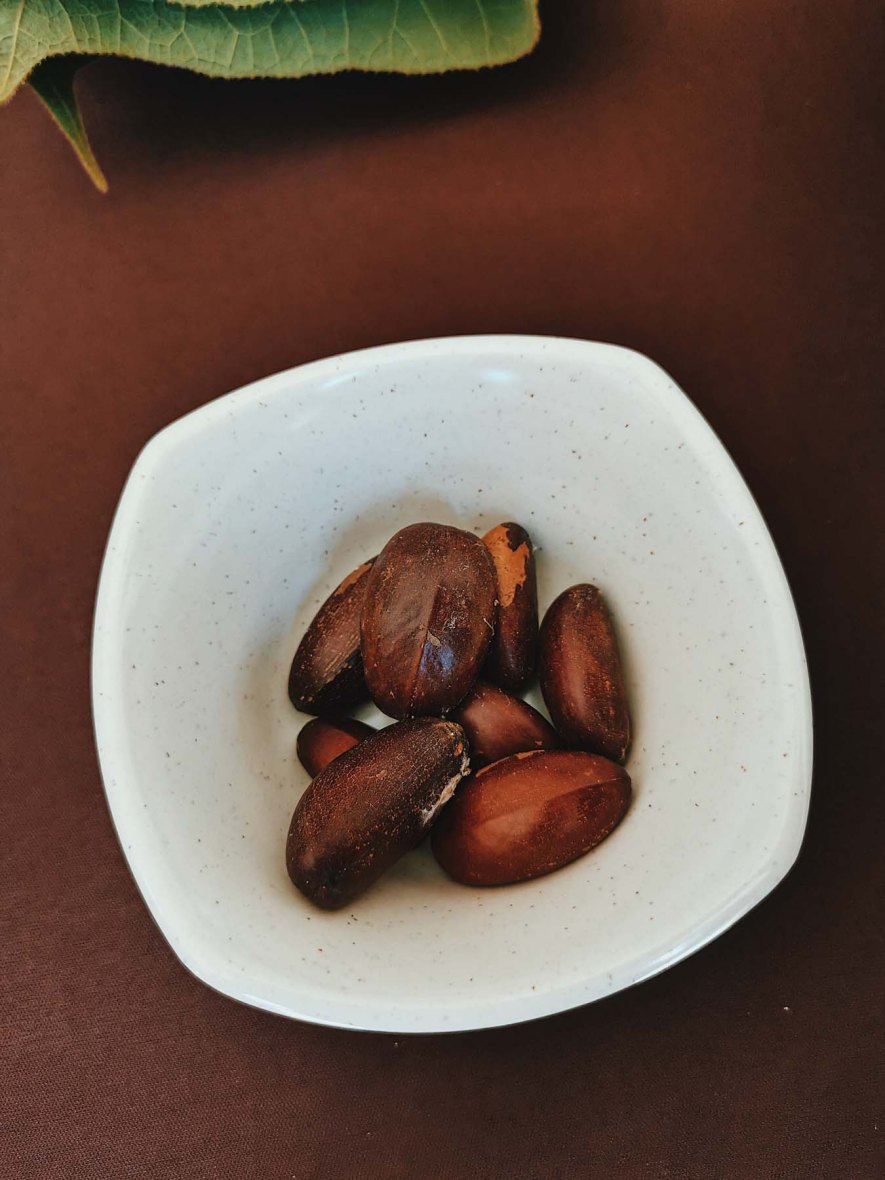 Rubber tree seeds