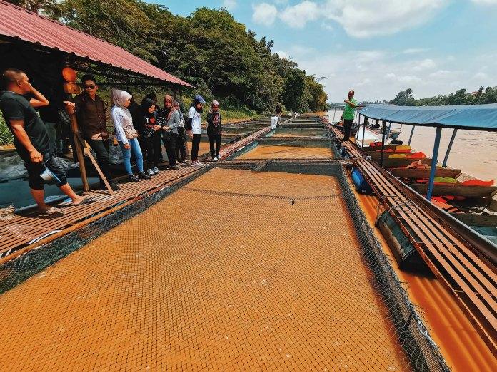 Temerloh Pahang - Patin Cultivation Farm