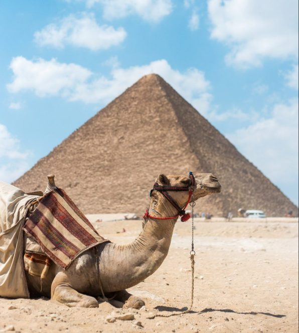 Camel resting at pyramids complex (Photo by Rosario Janza on Unsplash)