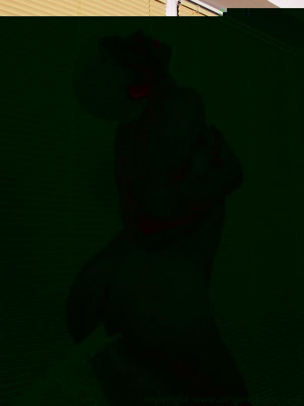 axel_tgp16.jpg