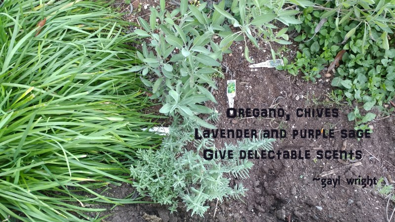 Herbs give delight
