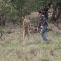 Cane aggredito da un canguro!