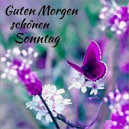 Guten Morgen Sonntag Spruche Spruche Guten Morgen Sonntag