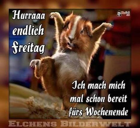 Wunderschonen Samstag Lustig Bilder Und Spruche Fur Whatsapp Und