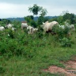 Ondo forests: FG's support for lawlessness is outrageous