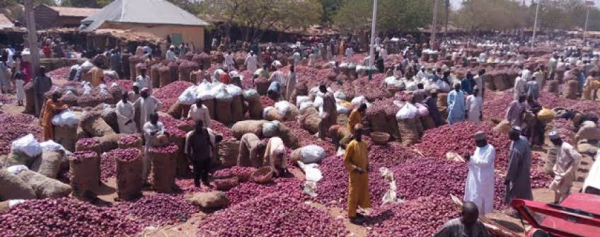 Why Onions is Now Expensive Nigeria?