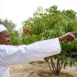 Agriculture: We need go back to land, leave petroleum - Buhari