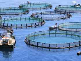Edo rallies investors to expand state's 350,000mt per annum aquaculture subsector