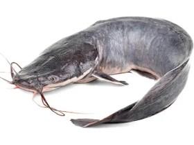 Eating Catfish linked with Cardiovascular Diseases – Dr. Arikawe Adeolu