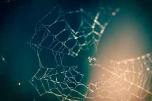 Household Plants that repel spiders and spider web