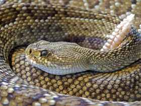Cleaning Habits that will Attract Snake into Your House