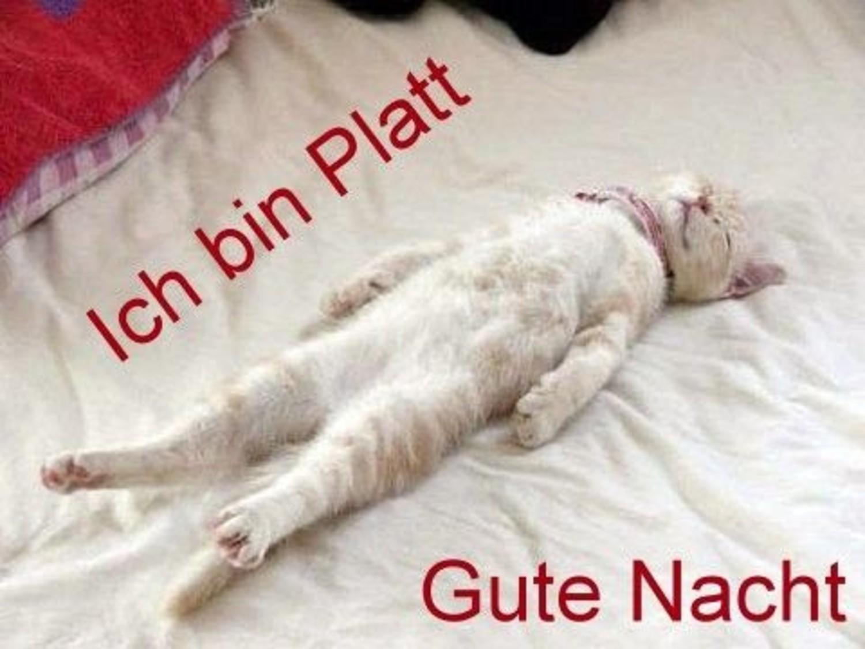 Witzig Lustige Gute Nacht Bilder Fur Whatsapp Whatsapp