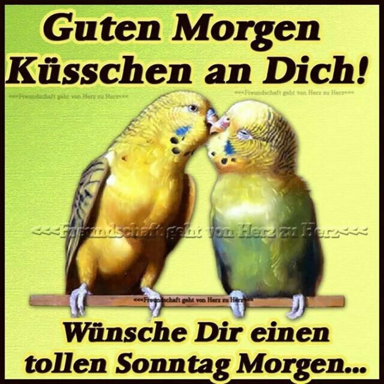 Schonen Sonntag Meine Liebe Gif 204 Gbpicsbilder Com