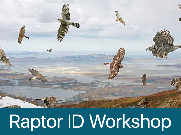 Raptor ID Workshop