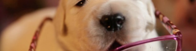 puppy eating glasses banner